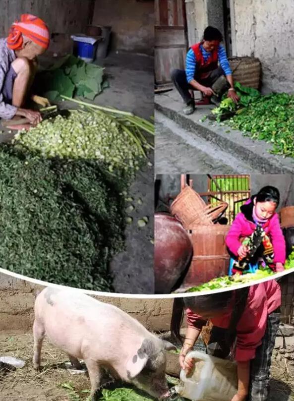 小时候做过的农活,你做过哪几样?